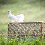 Produse columbofile pentru sanatatea porumbeilor tai
